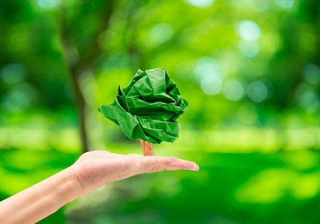 Вывоз бумаги экология